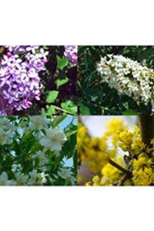 Hoge bloeiende haag 2