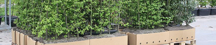 De verkoop van haagplanten soorten