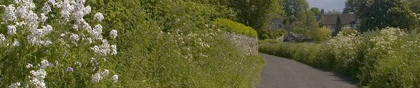 Wilde Landschapshaag