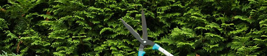 Haagplanten: Van onze kwekers tot in uw tuin