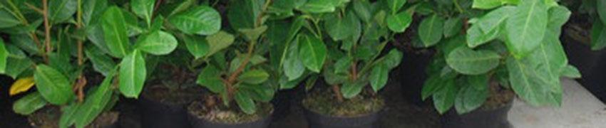 Haagplanten vergelijken