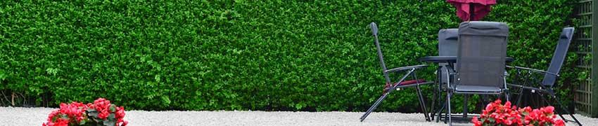 Ligusterhaag in de tuin