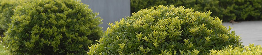 Plaats een andere plant