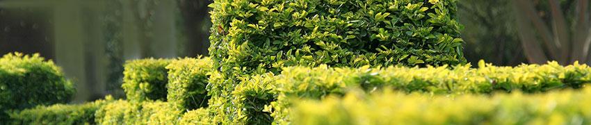 Plant advies