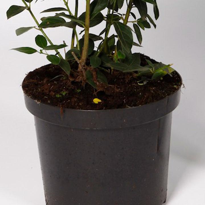 Potplanten kopen