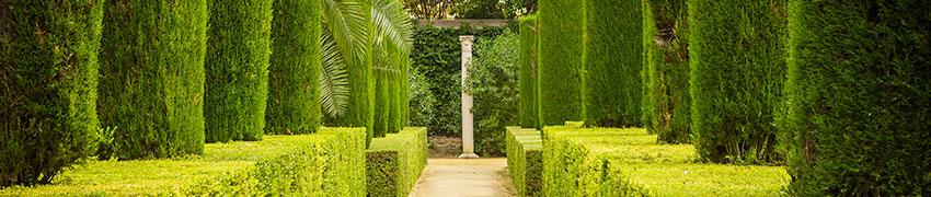 Haagplanten kopen. Hoe wij voor topkwaliteit zorgen